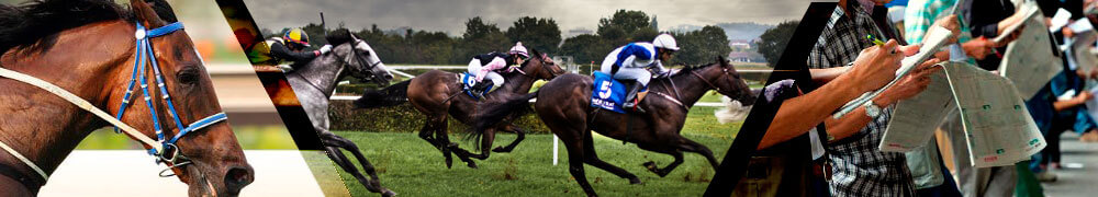 Horse Racing Betting Sites Online